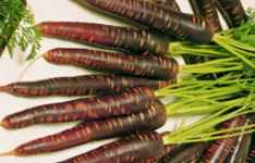Purple Haze Carrot
