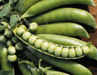 Lincoln Homesteader Pea