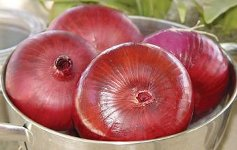 Pinot Rouge Red Grano onion